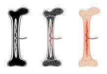 Bone Marrow Scan